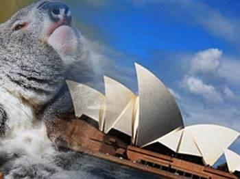 オーストラリア コアラ オペラハウス